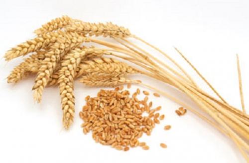 Le bon grain et l'ivraie 6.jpg