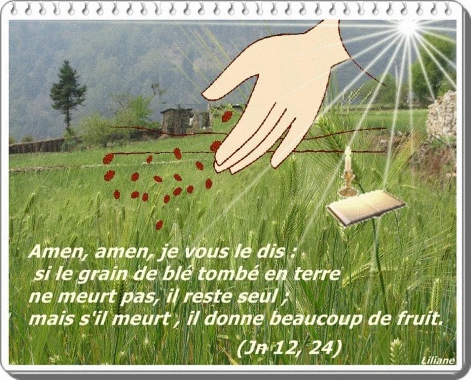 Grain de blé 2015 4.jpg