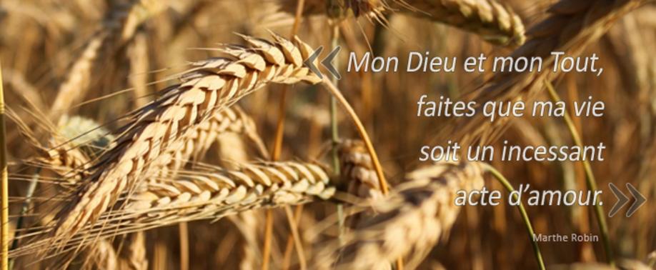 Grain de blé 2015 2.png
