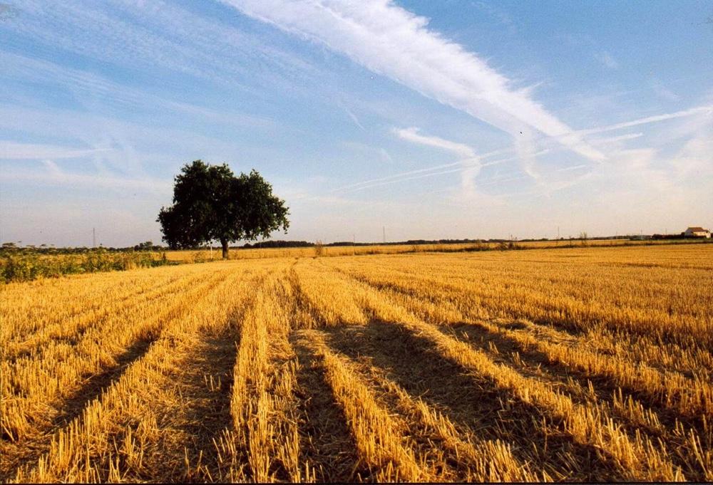 Parabole bon grain et ivraie 16.jpg