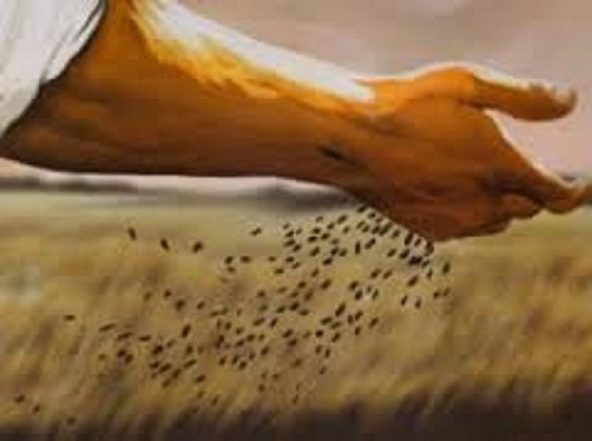 Parabole bon grain et ivraie 21.jpg