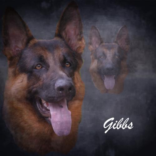 gibbs montage.jpg