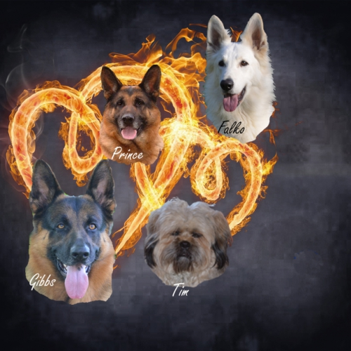 les chiens.jpg
