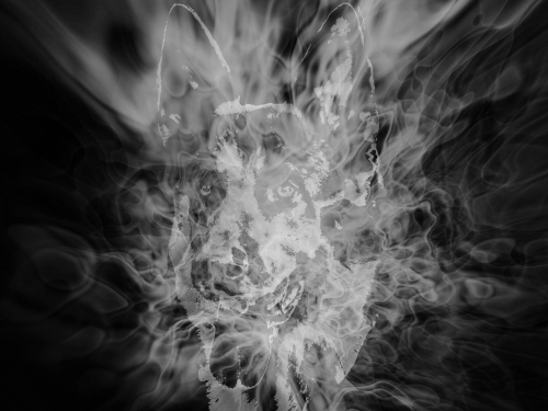 feu gibb2s.jpg
