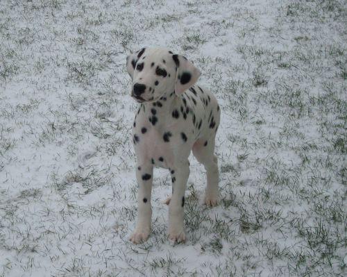 La découverte de la neige, elle adore