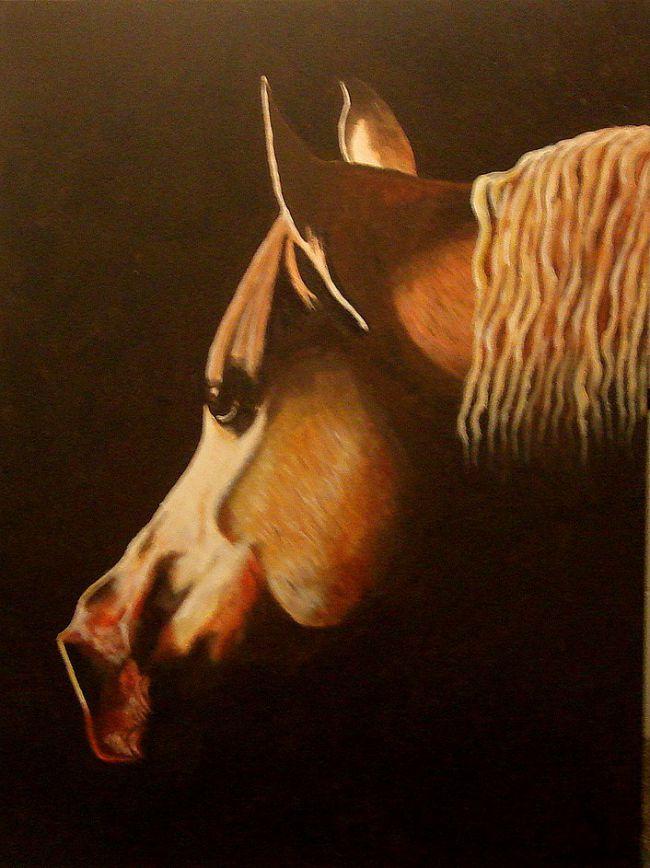 Portrait cheval curieux