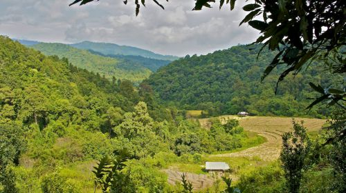 Forêt et rizières