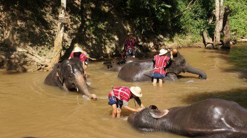 Eléphants à la douche