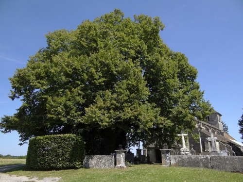Aubigny Eglise2.jpg