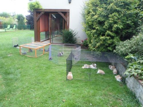 lapins ds le jardin 002.JPG