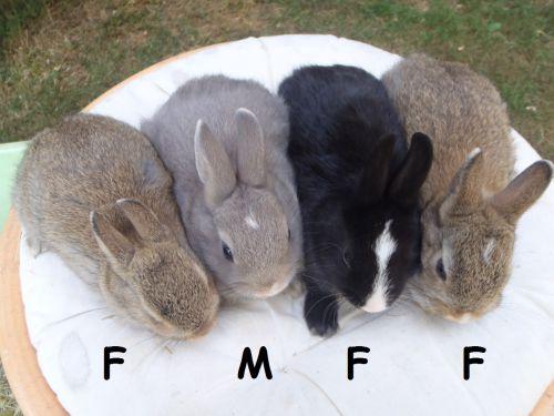4 lapins OD nés le 27 mai