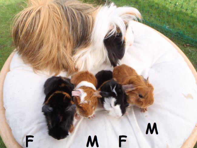 4 péruviens nés le 21 février