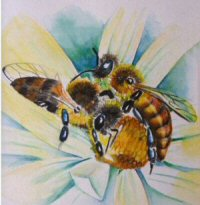 abeille Clr.jpg