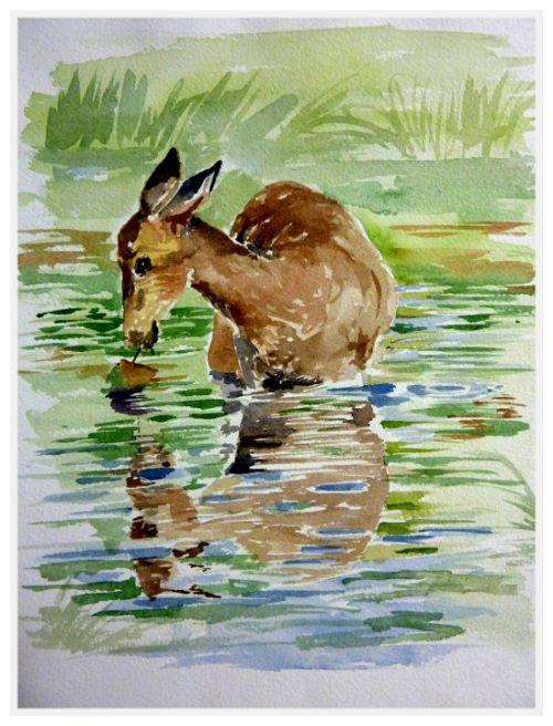 Biche  -    (Aquarelle - format 24 x 32)
