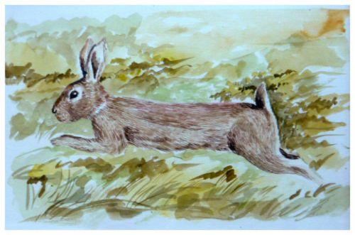 Lievre  -    (Aquarelle - format 24 x 32)