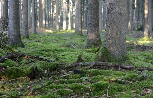 z Un-arbre-dans-la-foret-domaniale-de-Mellier.jpg
