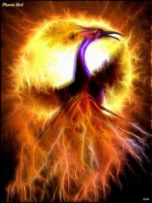 z oiseau.jpg