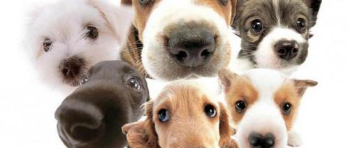 dogs1-620x264.jpg