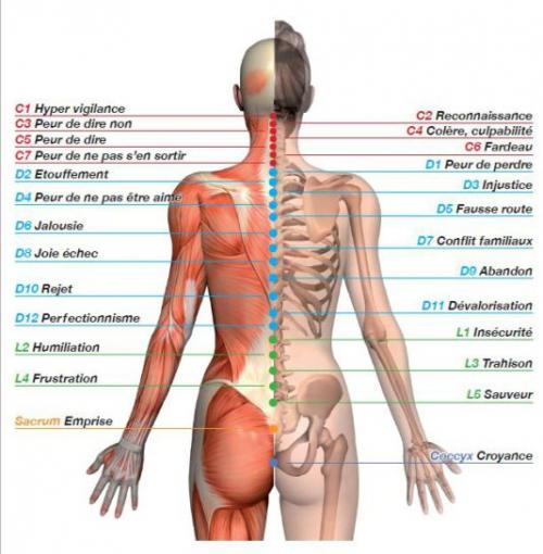 vertebres.jpg