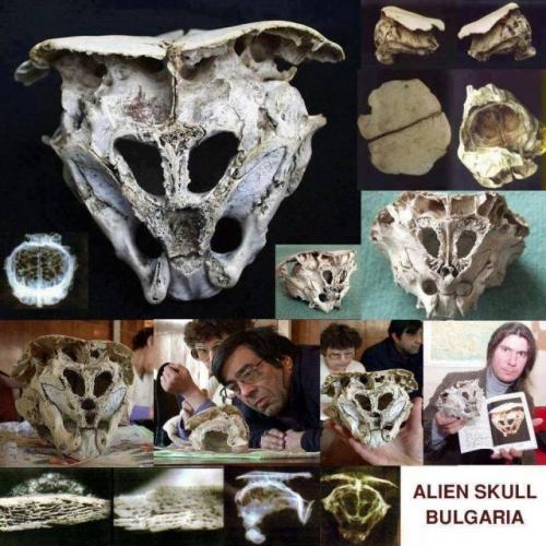 crane alien-skull1.jpg
