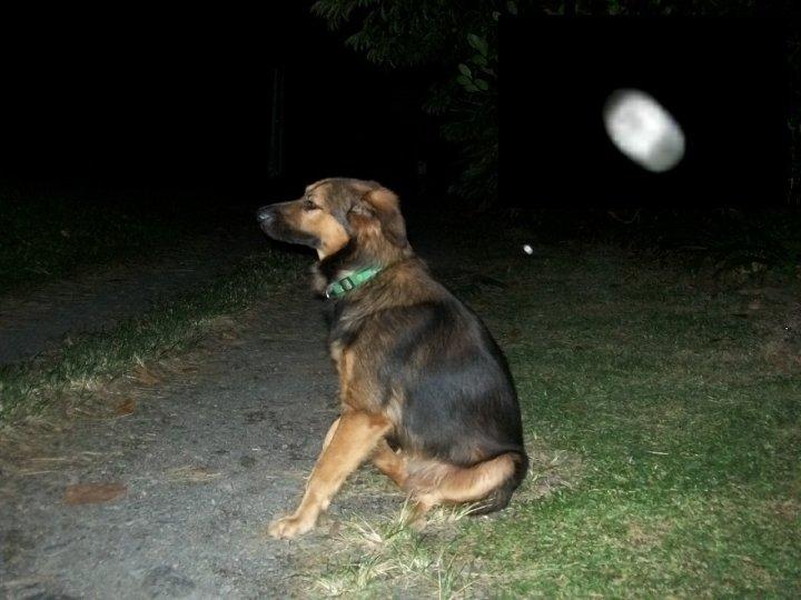 orbs chien_3801415_n.jpg