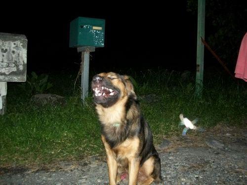 orbs chien  1808304131_n.jpg
