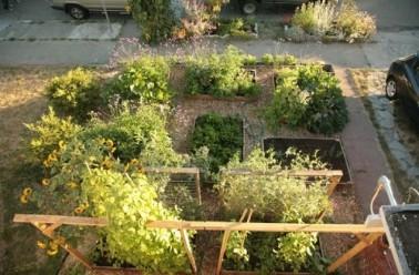 jardin 30.jpg