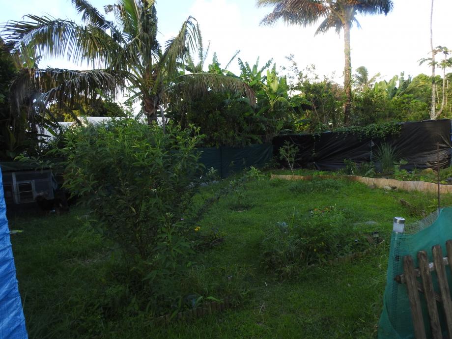 jardin1 lall.JPG