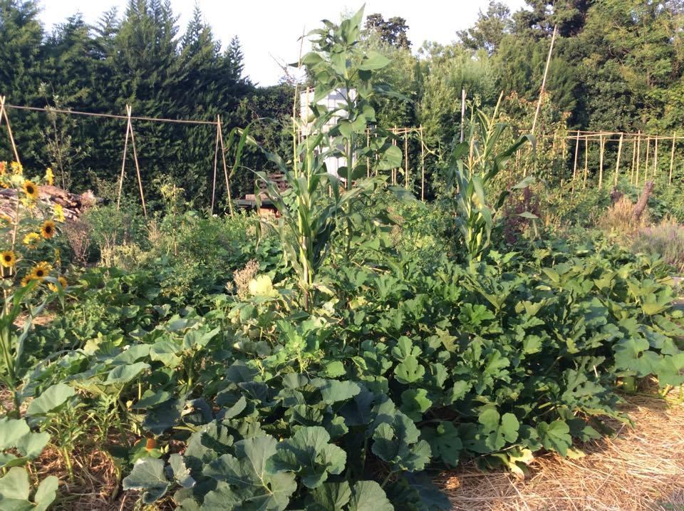 jardin22.jpg