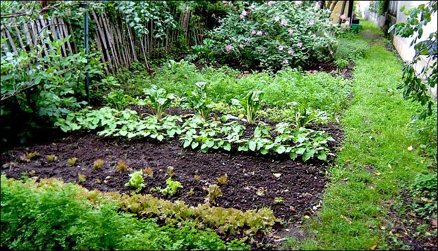 jardin29.jpg
