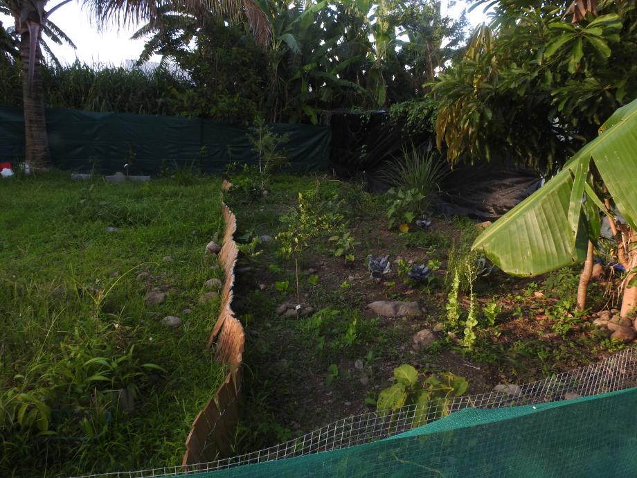 jardin2 lall.JPG