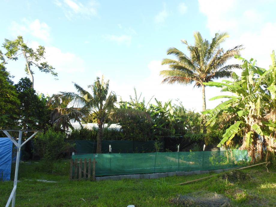 jardin5 lall.JPG