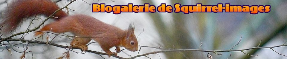 blogalerie de Squirrel