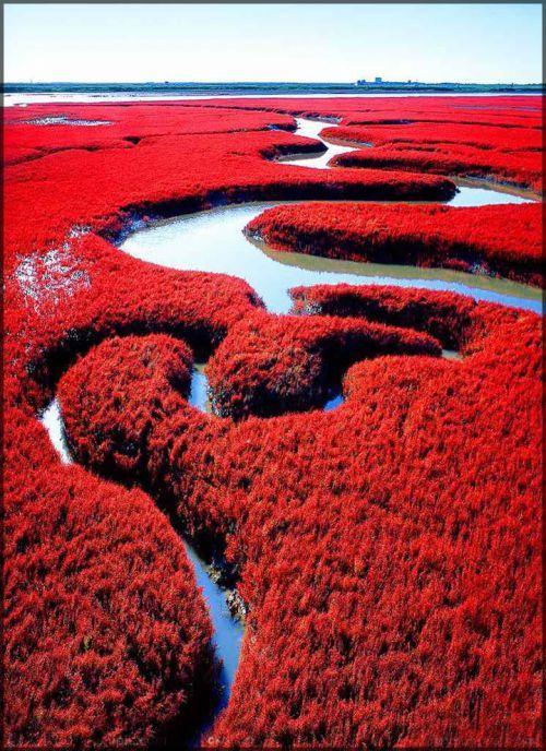 La plage rouge de Panjin, Chine