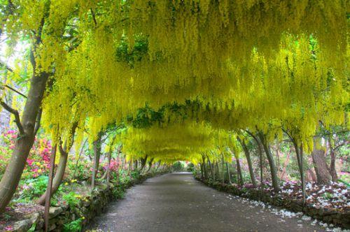 Le jardin de Bodnant au Royaume-Uni