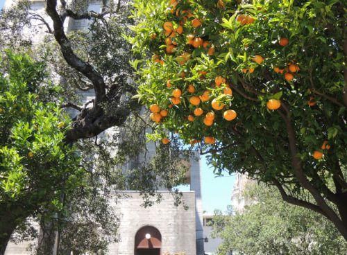 oranges de Californie au château