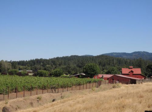 vignoble de la Sonoma