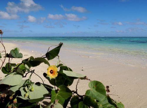 Iles Cook, Rarotonga (Pacifique Sud)