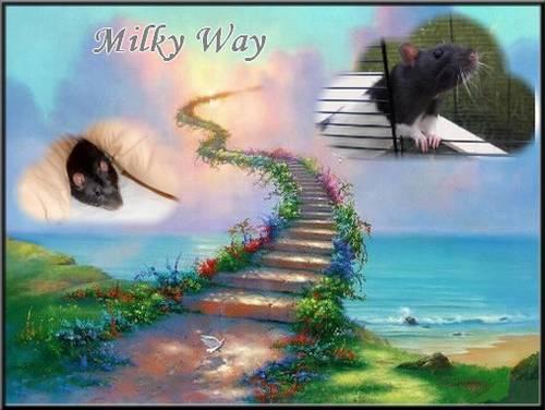Milky Way2.jpg