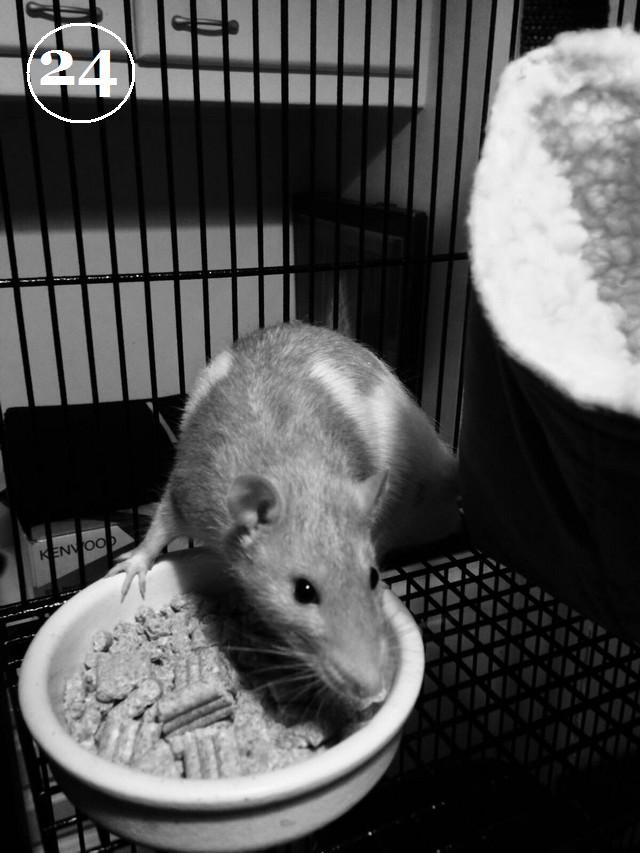 24 Rémy le rat - Rémy.JPG