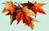 feuilles2.png