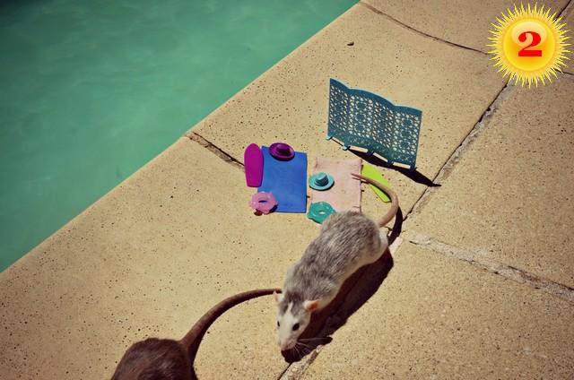 2 - Dogsi Quinzel Bellatrix blog.jpg