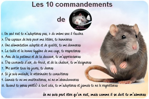 commandements ok BLOG - Copie.jpg