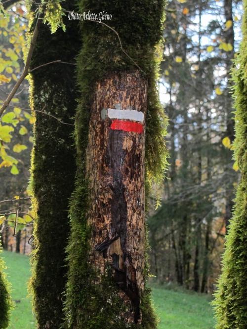 IMG_1939_arbre_balisage_chemin.JPG