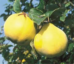 cognasier fruit.jpg