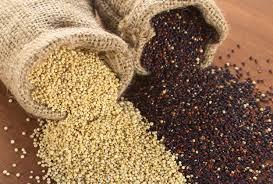 Quinoa graine.jpg