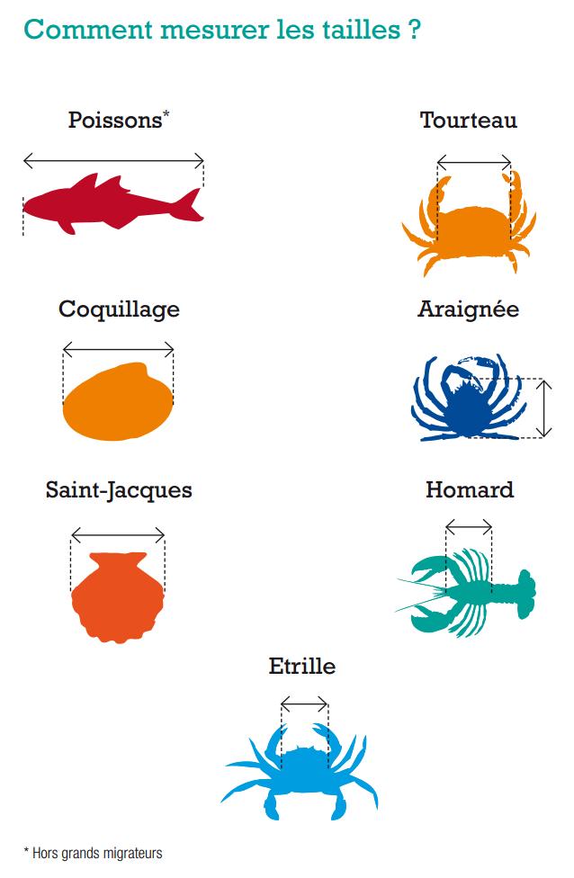 https://static.blog4ever.com/2012/03/678268/2015-Comment-mesurer-un-poisson-ou-crustace.PNG