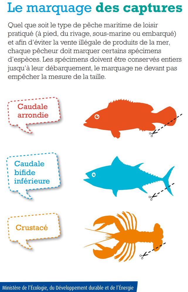 https://static.blog4ever.com/2012/03/678268/2015-Marquage-des-poissons-et-crustace.PNG