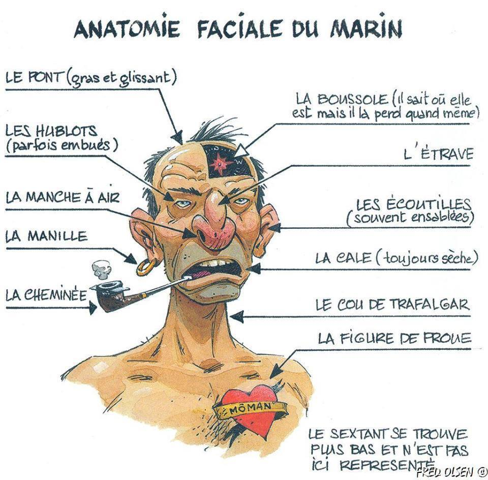https://static.blog4ever.com/2012/03/678268/anatomie-du-marin.jpg
