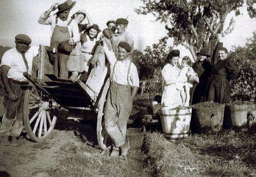 Vendanges aux vignots 1944